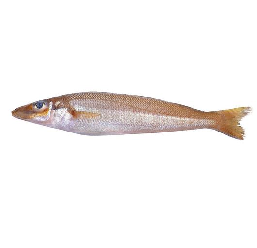 Picture of Indian Whiting 50-100gr