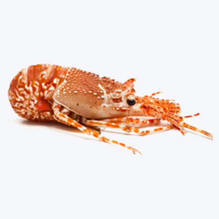 Picture for category Crustaceans