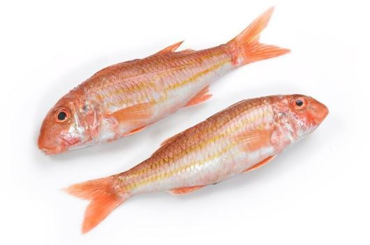 Picture of Black Sea Red Mullet Small