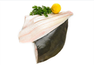 Picture of Indian Halibut