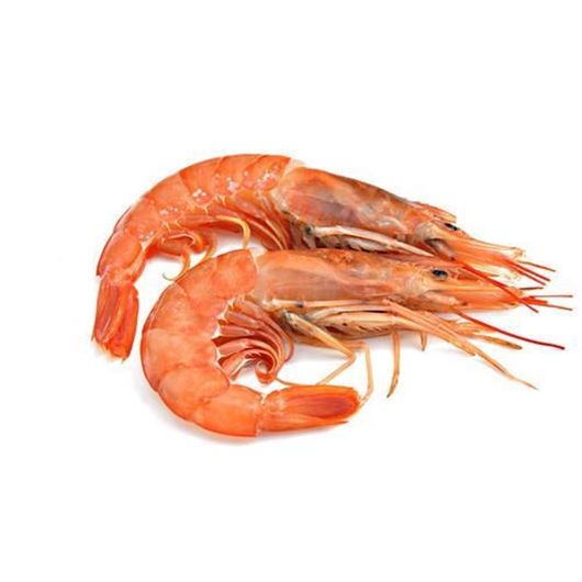 Picture of Red Tiger Prawn