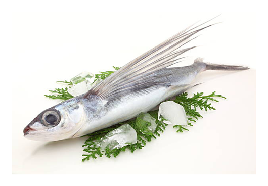 Picture of Flying Fish